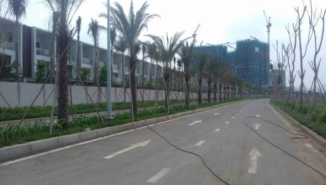 tong the du an Palm Garden