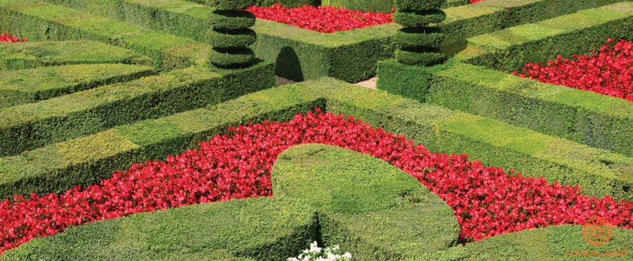 Tiện ích dự án căn hộ An Gia Garden - vườn Pháp