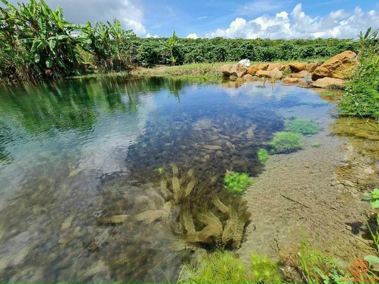 Tiện ích dự án đất vườn 70 Damb'ri Bảo Lộc Lâm Đồng - Thiên nhiên trù phú
